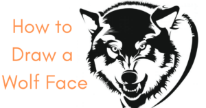 How-to-draw-wolf-face