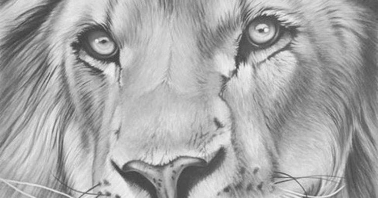 how-to-draw-a-lion