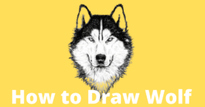wolf-drawing