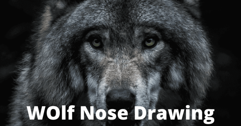 wolf-nose-drawing