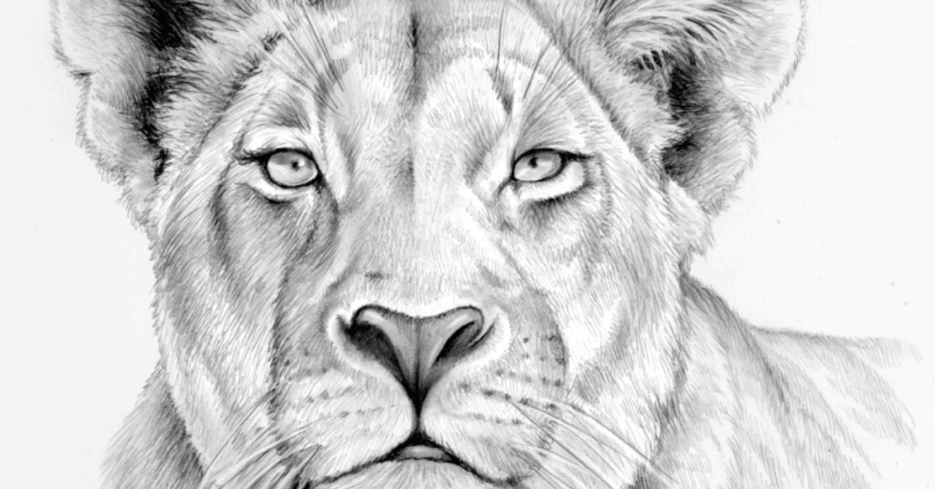 female-lion-drawing