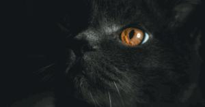 drawing-black-cat
